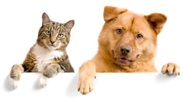cat-versus-dog