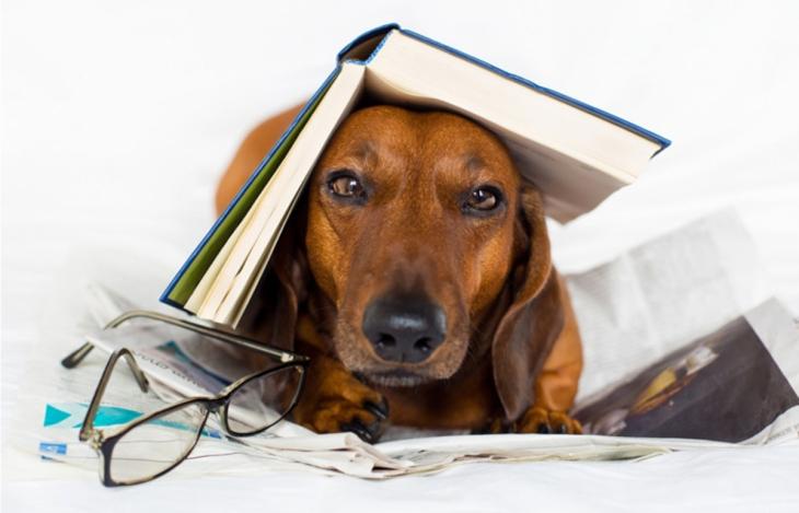 dog-books
