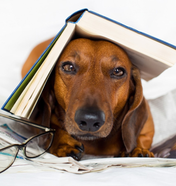 dog-books