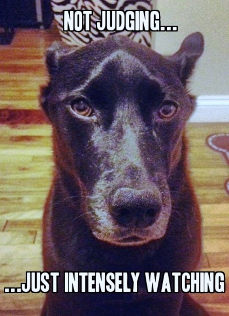 judgemental-dog