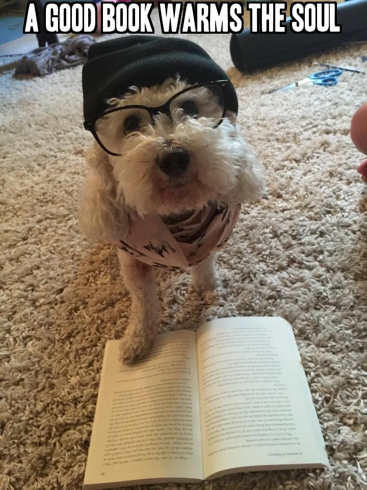 cindy's dog