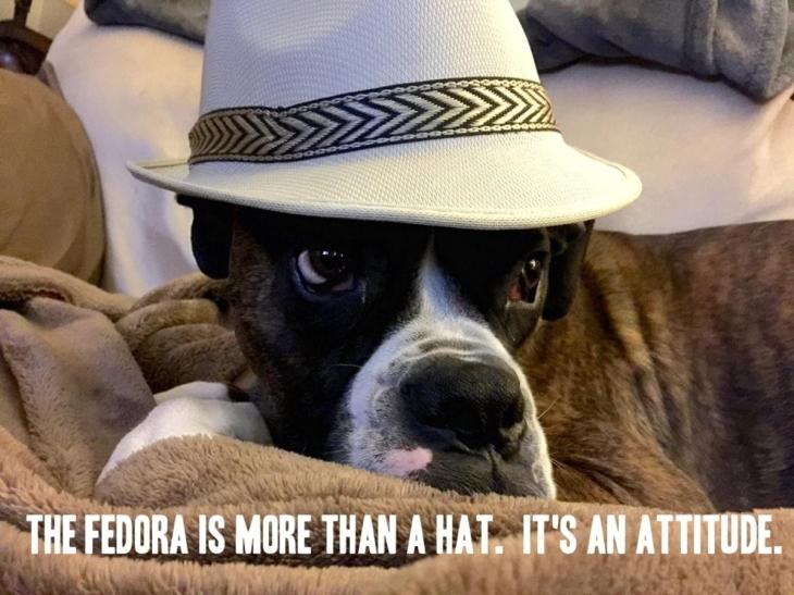 fedora-attitude