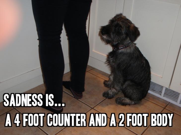 sad-dog-quote