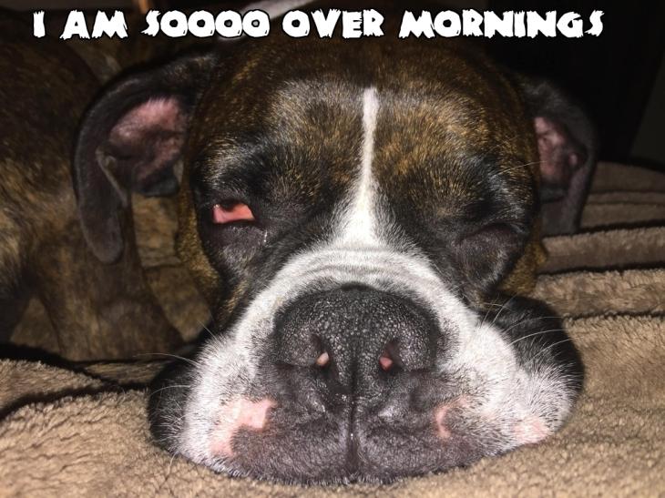 So Over Mornings