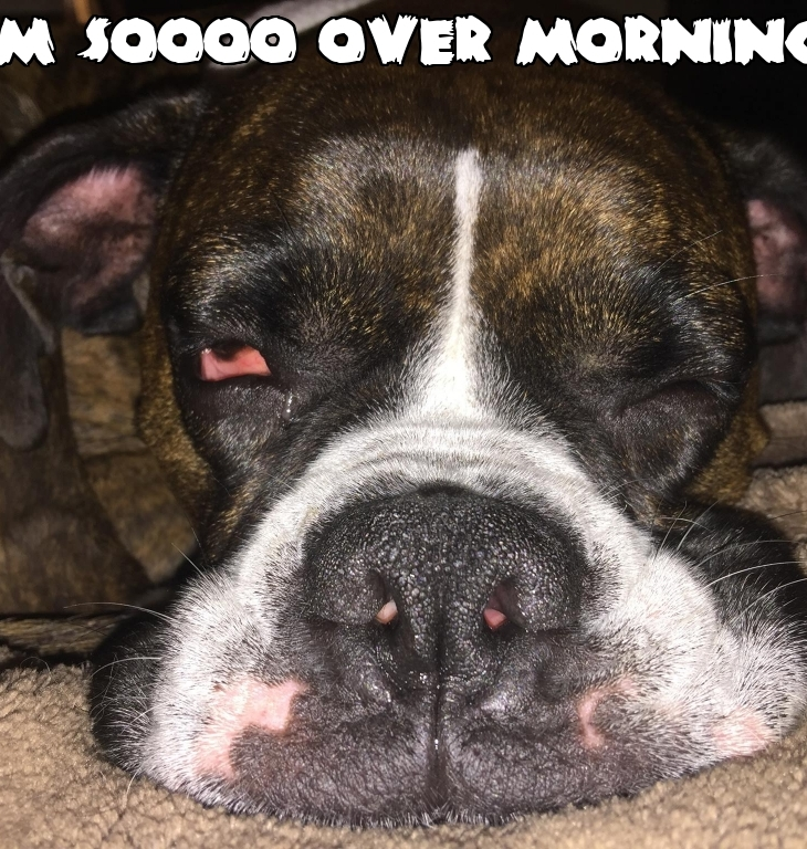 dog-morning-quote